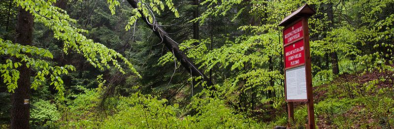 Obszar natura 2000 Luboń Wielki