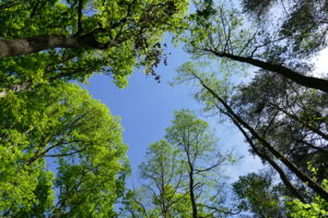 Las w okolicy Bolechowic