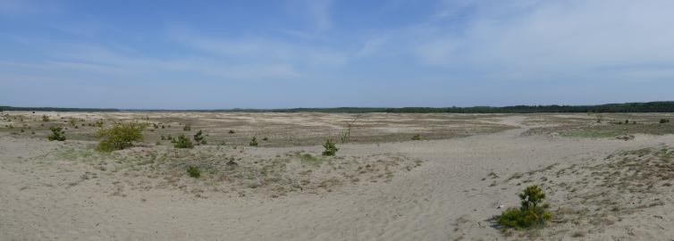 Pustynia Błędowska – wycieczka polotnych piaskach